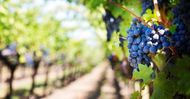 Great Grapes Festival near Salisbury. MD